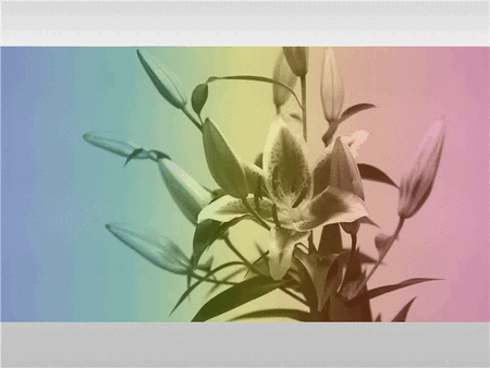 Download Video with multi-colored tint